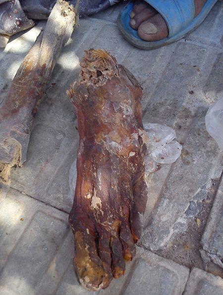پای عظیم الجثه کشف شده در گلباف در روزهای اخیر