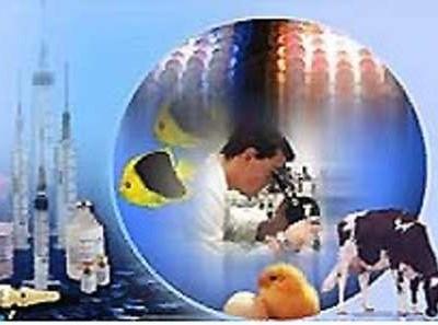 واکسیناسیون یک میلیون و 698 هزار راس دام در جنوب کرمان