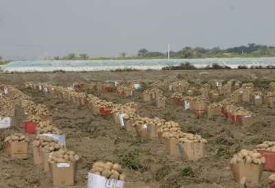چتر حمایتی دولت برای کشاورزان جنوب کرمان گسترش یافت
