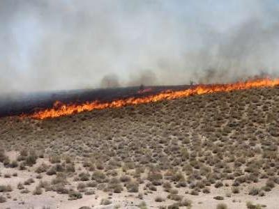 آتش سوزی در منابع طبیعی کرمان هشت برابر شد